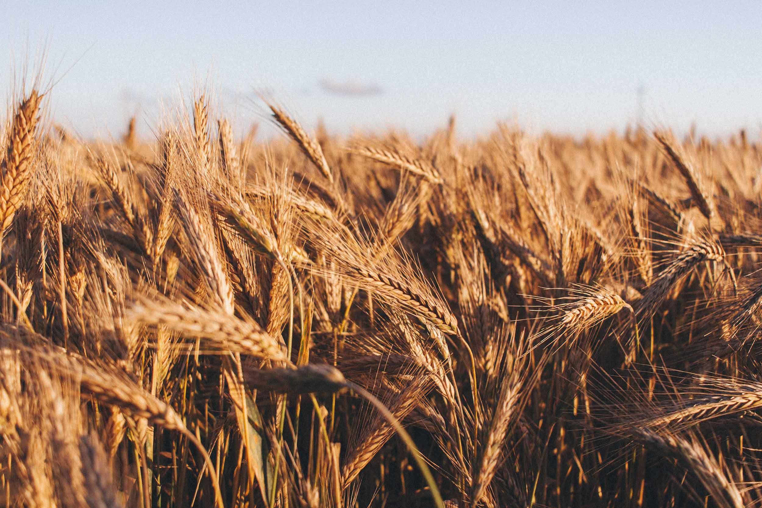 harvest festival crops